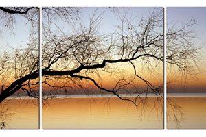 Black branch sunset